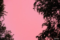 One night I looked up to see a pink sky.