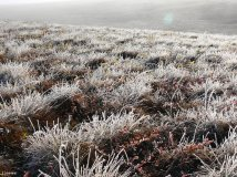 Frosty Tundra