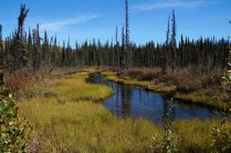 It's only late August, but that means fall up here, about 60 miles north of Fairbanks.