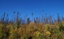 And lots of burnt forest.